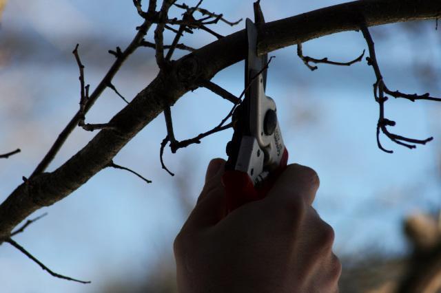 potatura-alberi-da-frutto