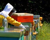 tuta-apicoltore-miglior-abbigliamento
